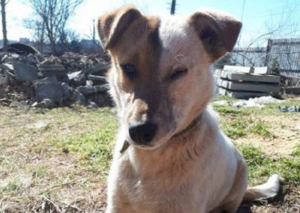 В Умані невідомі познущалися над собакою, відрізавши хвоста (ФОТО)