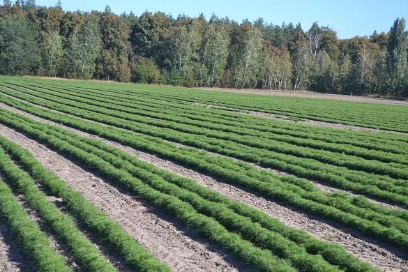 На Черкащині висаджують гектари лісу