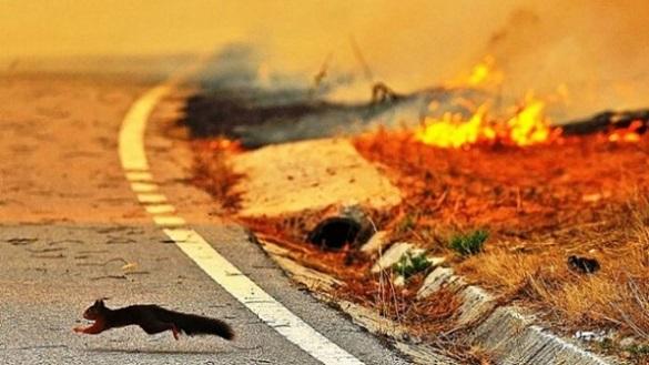 Димові хмари та згорілі тварини: черкасцям розповіли про шкоду спалення трави (ВІДЕО)
