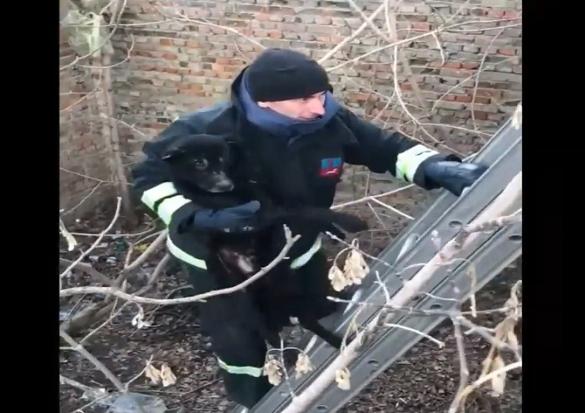 На Черкащині врятували собаку, який впав до ями (ВІДЕО)