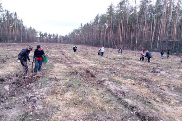 На Черкащині продовжують висаджувати молоді дерева (ФОТО)