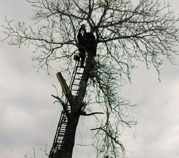 На Черкащині чоловік опинився в полоні у дерева