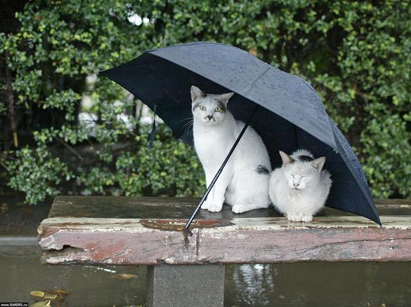Готуйте парасолю: завтра на Черкащині дощитиме