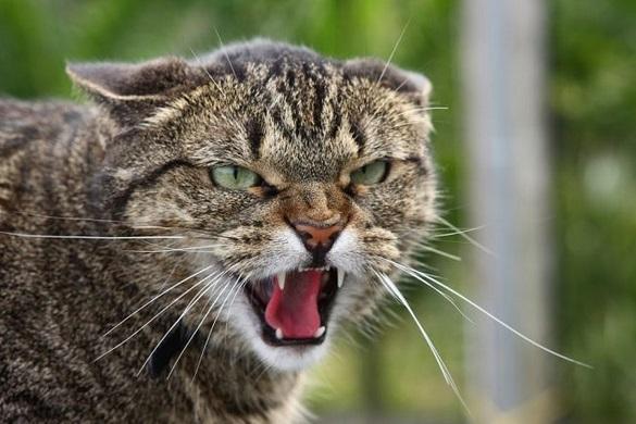 У Черкасах територію, де жінку покусала кішка, оголосили загрозливою щодо сказу
