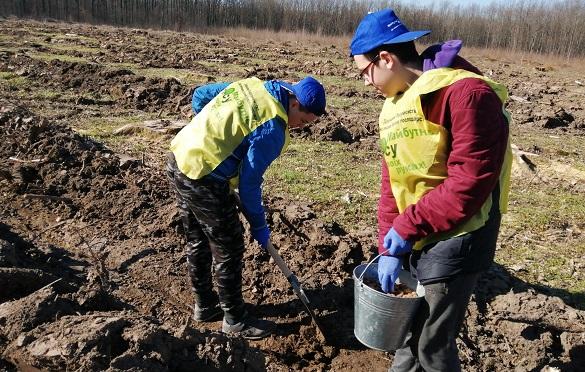 На Черкащині школярі висадили дубовий ліс на честь учасників АТО