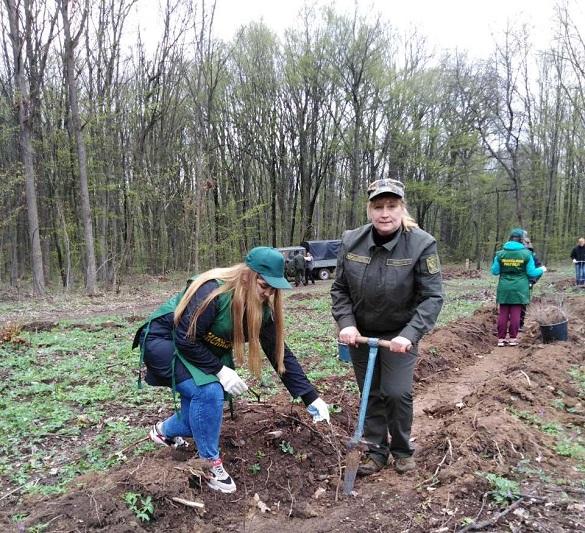 На Черкащині висадили дубовий ліс