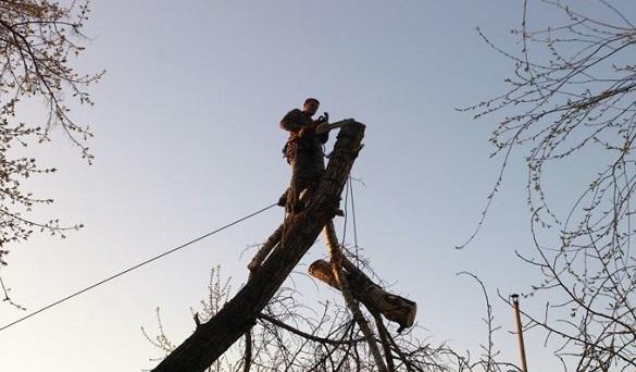 В одному з мікрорайонів Черкас зріжуть 90 дерев