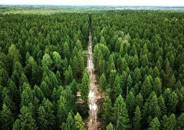 На Черкащині висадили понад тисячу гектарів лісу