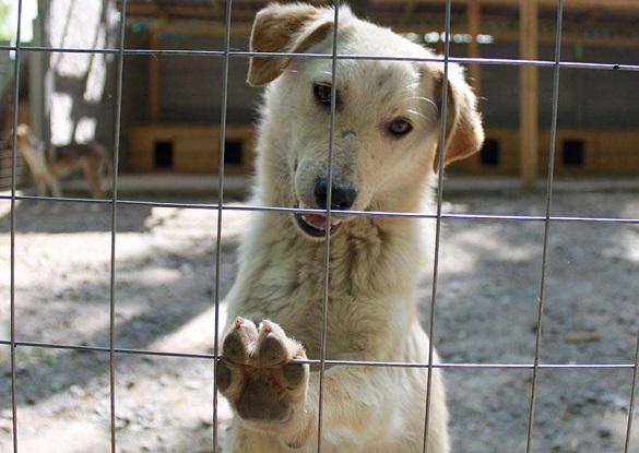 У Черкасах збудують нові вольєри для безпритульних тварин