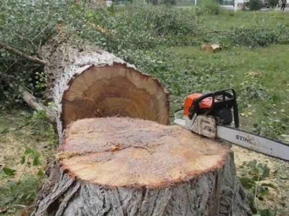 У черкаському парку зріжуть більше 200 дерев