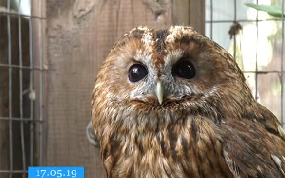 Врятовані пухнасті та пернаті: у черкаському зоопарку переповіли історії принесених тварин (ВІДЕО)