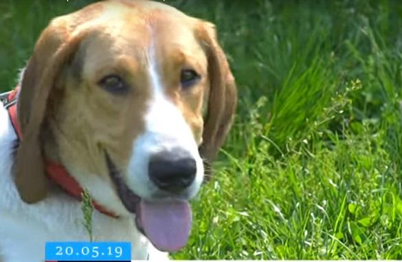Гострий слух та ідеальний зір: у Черкасах визначили найвправніших мисливських собак (ВІДЕО)