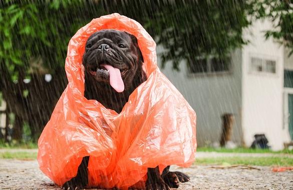 Сьогодні на Черкащині дощитиме