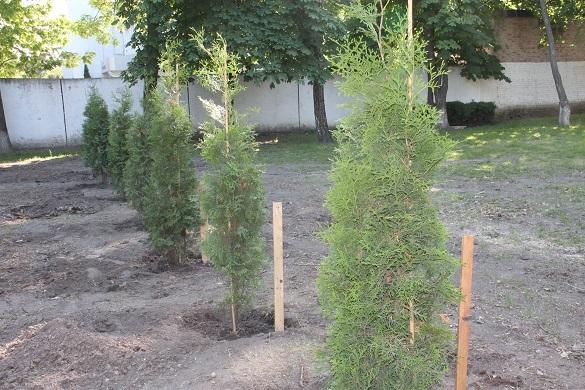 Крадії поцупили дерева з території черкаської гімназії