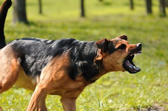 У Лисянці агресивні пси покусали жінок