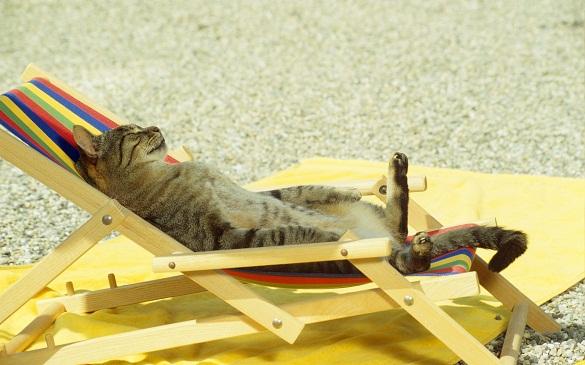 Сьогодні на Черкащині пануватиме спека