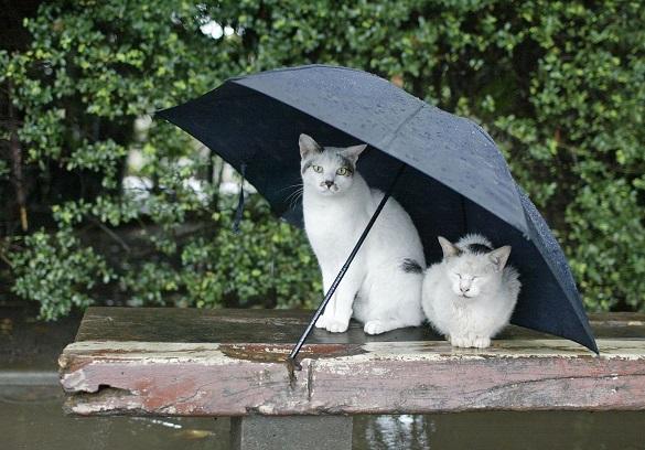 Готуйте парасолю: синоптики обіцяють на Черкащині дощі з грозами