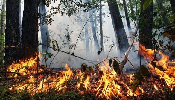 На Черкащині оголосили надзвичайний рівень пожежної небезпеки