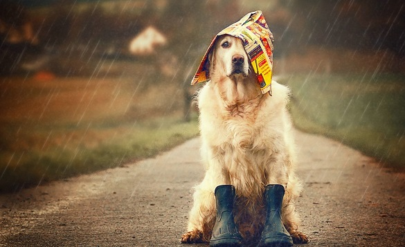 Дощ, град і шквали: на Черкащину наближається прохолода