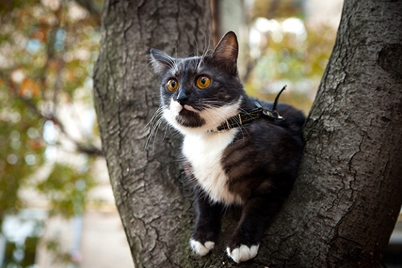 У Черкасах врятували з дерева кота