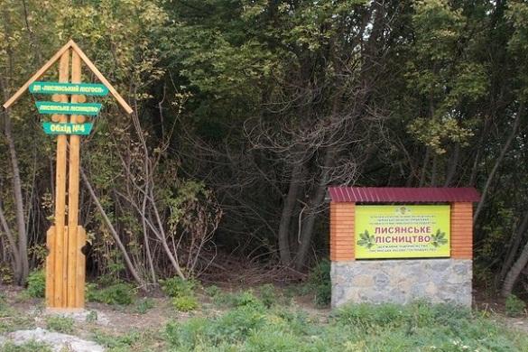 На Черкащині засудили екс-директора лісового господарства