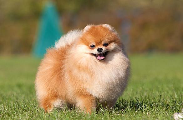 Черкащанин купив собаку з підробленими документами (ФОТО)