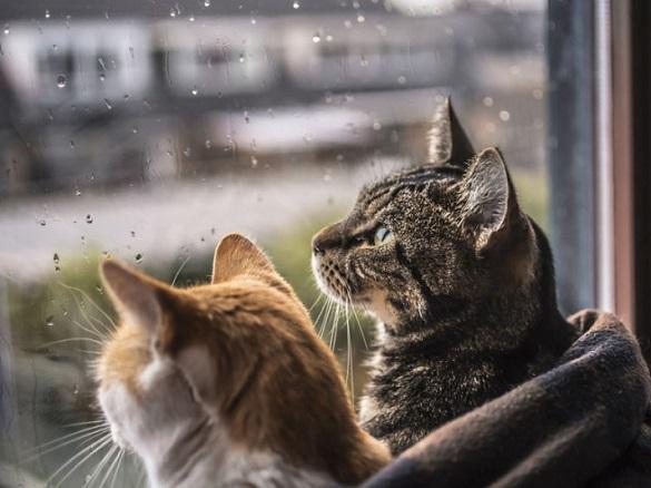 Дощ, грози і шквали: на Черкащині очікується похолодання