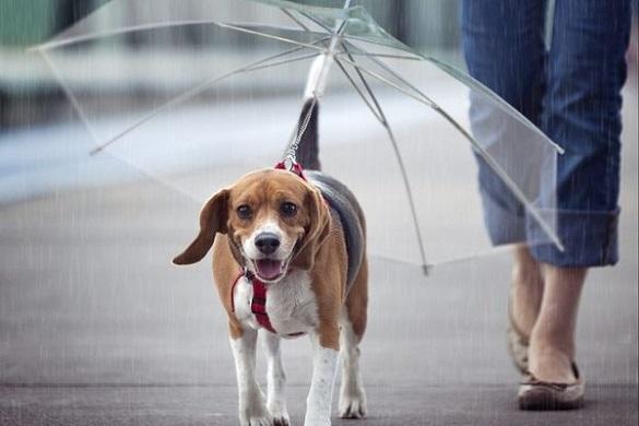 Завтра на Черкащині можливі дощі та грози