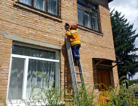 На Черкащині у стінах школи оселилися дикі бджоли (ФОТО)