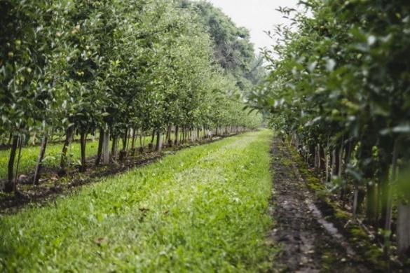 Яблука розбрату: на Золотоніщині селяни повстали проти бізнесу