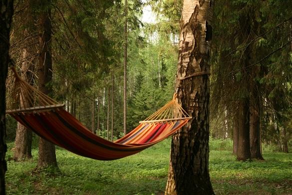 Пункти відпочинку в лісах Черкащини можна знайти на мапах Google maps