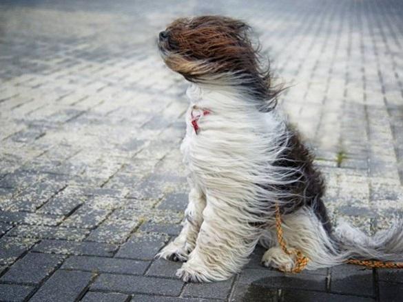 Штормове попередження: на Черкащині очікуються грози, град і шквали
