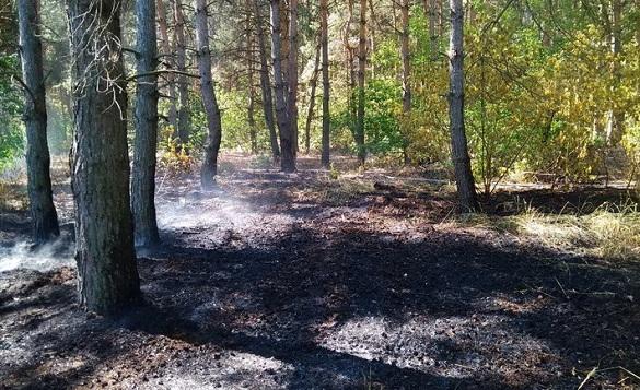 На Черкащині горів ліс (ФОТО)