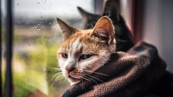 На Черкащині очікуються дощі та похолодання