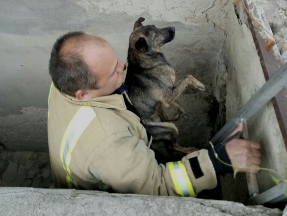 На Черкащині з ями врятували чотирилапого (ФОТО)