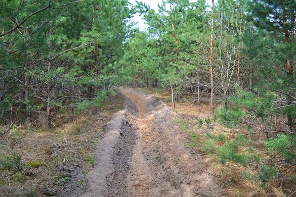 Ліси Черкащини боронять від пожеж (ФОТО)