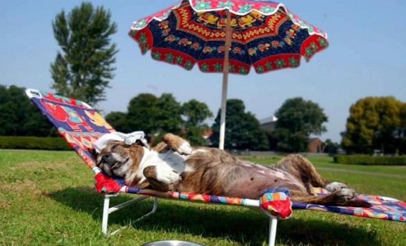 У найближчі дні на Черкащині буде рекордно спекотно