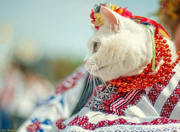 День незалежності України черкащани зустрінуть з ідеальною погодою
