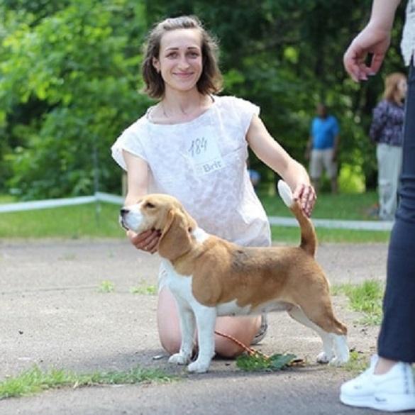 У Золотоноші вперше зробили переливання крові собаці (ФОТО)