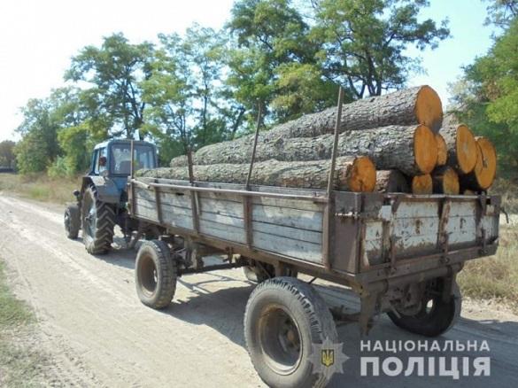 На Черкащині чорні лісоруби вирубували дерева