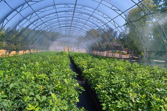 На Черкащині впроваджують нові технології вирощування лісів