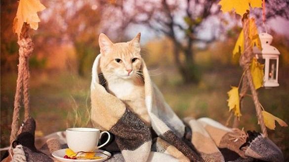 Осінь на старті: вже в суботу на Черкащині похолоднішає