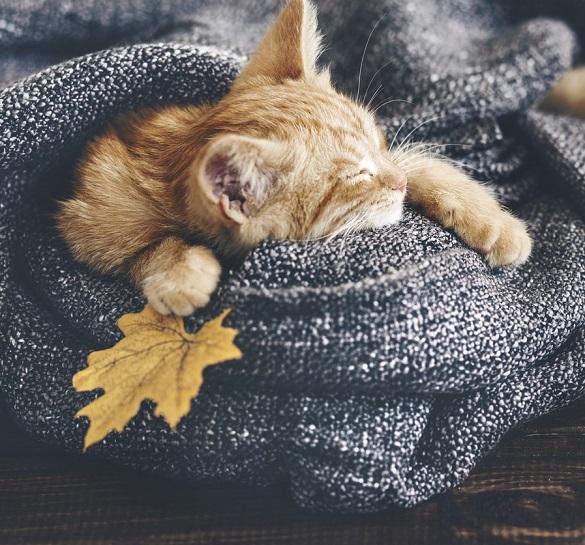 Дістаємо теплий одяг: із кожним днем на Черкащині холоднішатиме