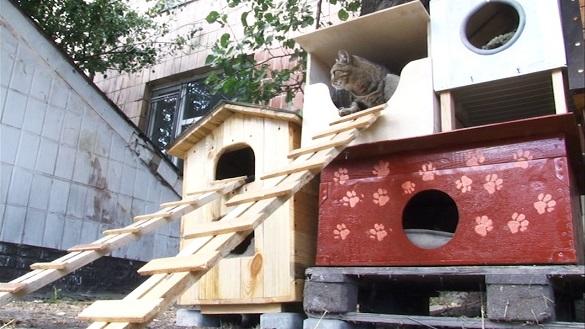 На Черкащині школярі майструють будиночки для безпритульних тварин (ВІДЕО)