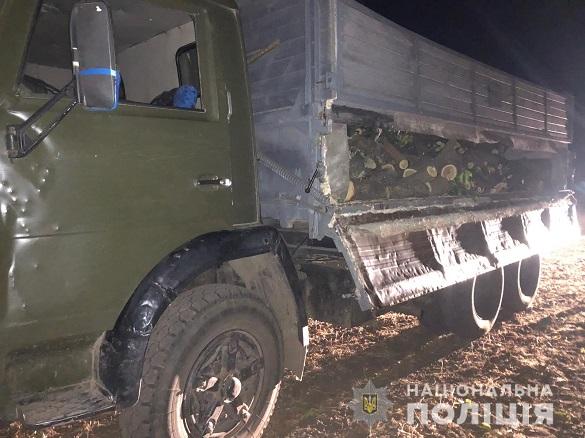 Іноземці з черкащанином вирубали цілу вантажівку лісу (ВІДЕО)