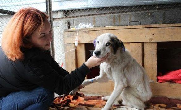 Якнайшвидше видужати та знову повірити людям: черкаські волонтери просять врятувати собаку