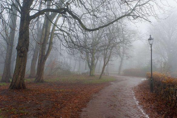 Синоптики попереджають про туман на Черкащині