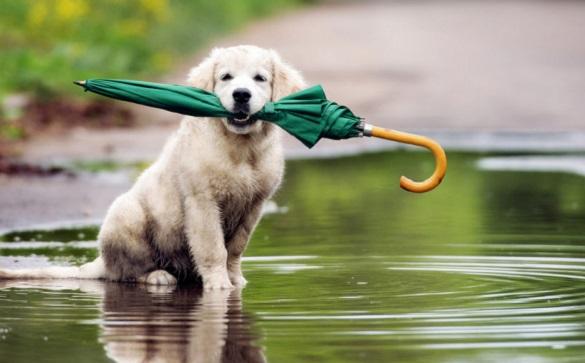 На Черкащині очікується потепління та періодичні дощі