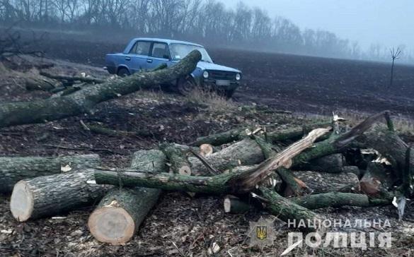 На Черкащині затримали зловмисників, які вирубували дерева (ФОТО)