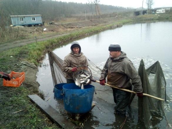 В річку Дніпро у Черкасах випустили 6 тисяч кілограмів риби